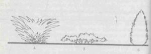 Декоративные кустарники - форма кроны, фото